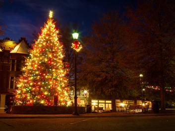 The Town Tree on a Quiet Night. Photo by Thos. W. Duggan