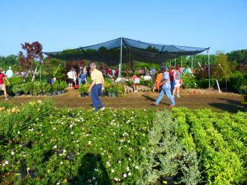 McCorkle Nurseries Giant Plant Sale