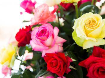 Roses abound at Thomasville 97th Annual Rose Show and Festival