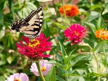 Flower and Butterfly Festival at The Rock Ranch
