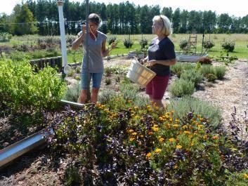 White Hills Herb Farm - Dearing, GA