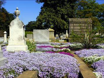 Not only is Historic Oakland Cemetery repository of history, art, and architecture; but is also a botanical garden and arboretum.  Photo courtesy of Dinny Addison