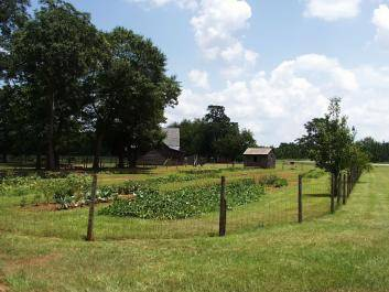 The vegetable garden at the Jimmy Carter Boyhood Farm