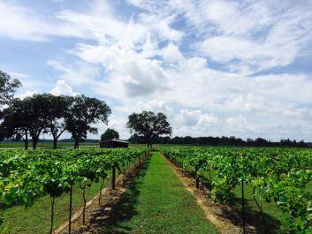 Our Vineyards, Pelham