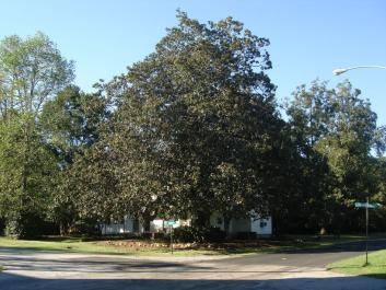 In the city of Culloden, the oldest Magnolia tree in the state of Georgia stands across the street from the state's oldest Methodist church.
