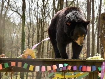 DJ the Bear celebrates his birthday!