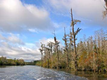 Okefenokee Swamp at Stephen C. Foster.