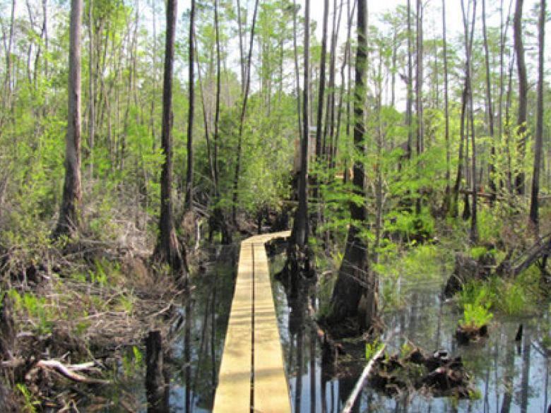 Okefenokee Swamp Park Okefenokee Swam...