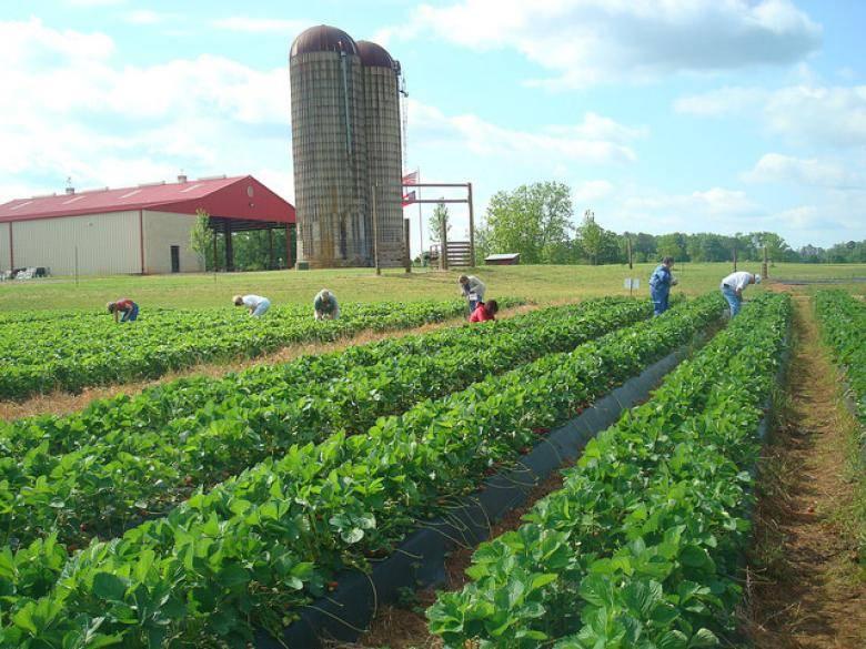 Southern Belle Farm Official Georgia Tourism Travel Website Explore Georgia Org