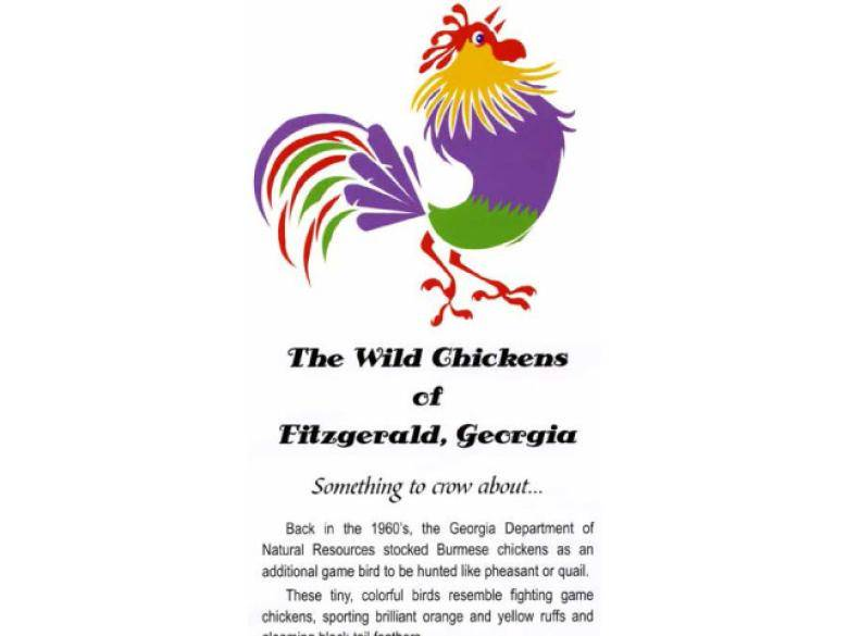 The Wild Chickens of Fitzgerald | Official Georgia Tourism