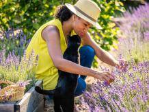 Woman and cat with lavender at White Hills Farm in Thomson, Georgia