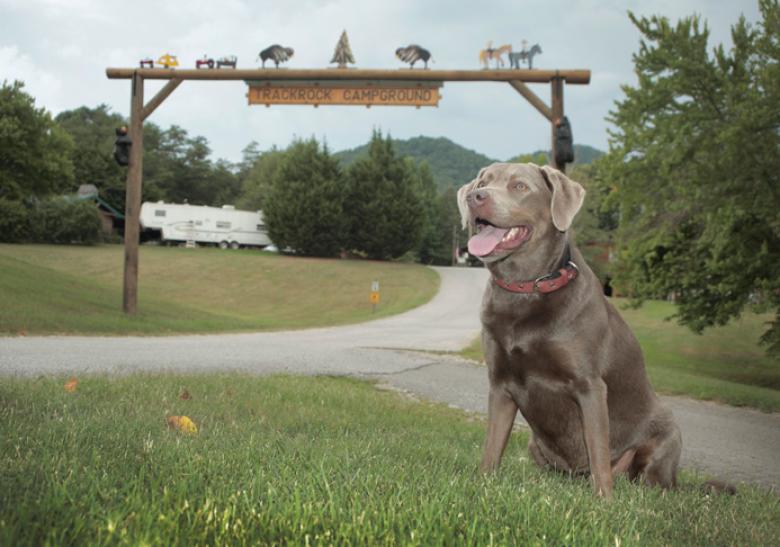 Trackrock Campground In Blairsville