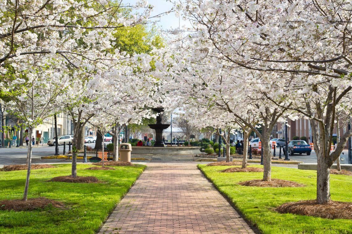 5 Places To See Cherry Blossoms In Georgia Official Georgia Tourism Travel Website Explore Georgia Org