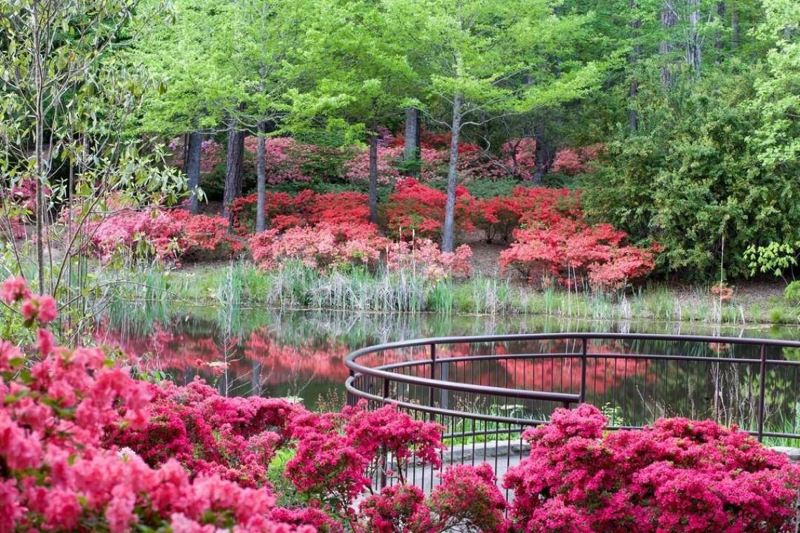 Georgia Garden: 10 Best Gardens To Visit In Georgia