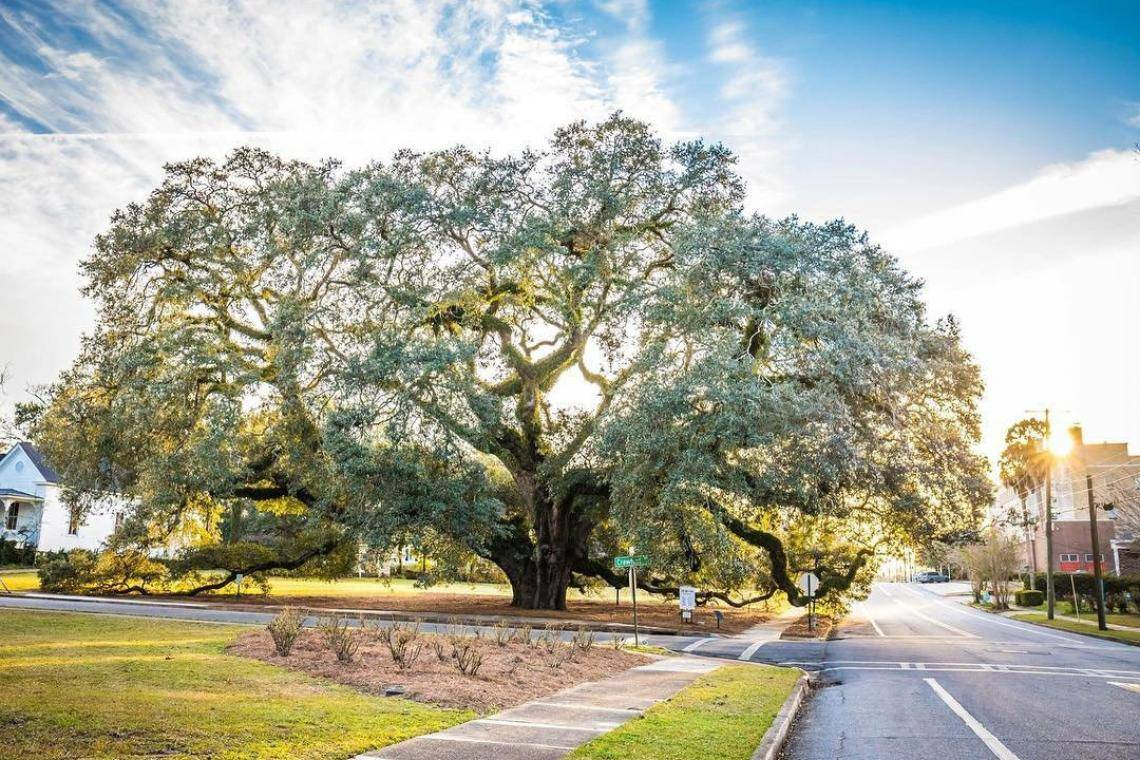 The 2020 Visitor Guide to Thomasville, Georgia Eat, Stay \u0026 Play