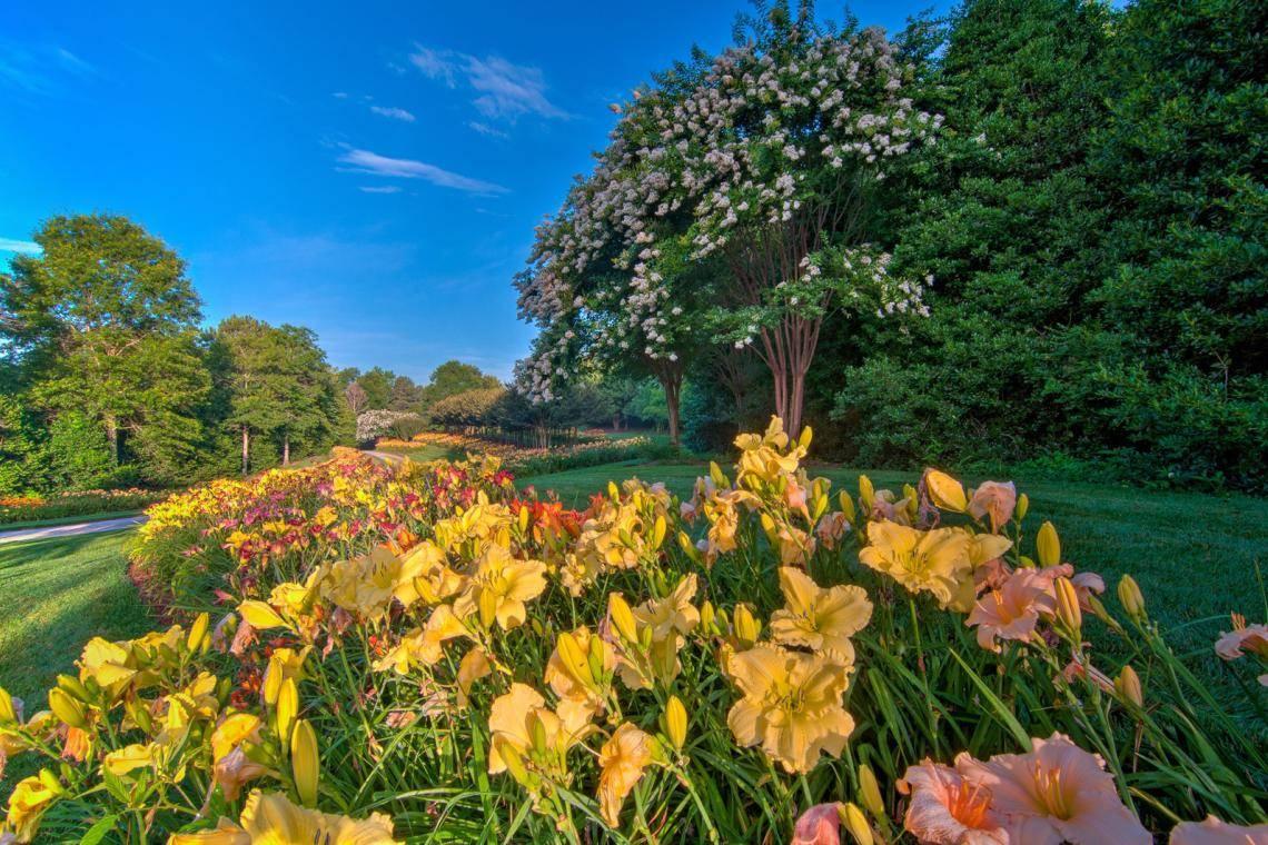 Daylilies Stars Of Summer Gardens Official Georgia Tourism