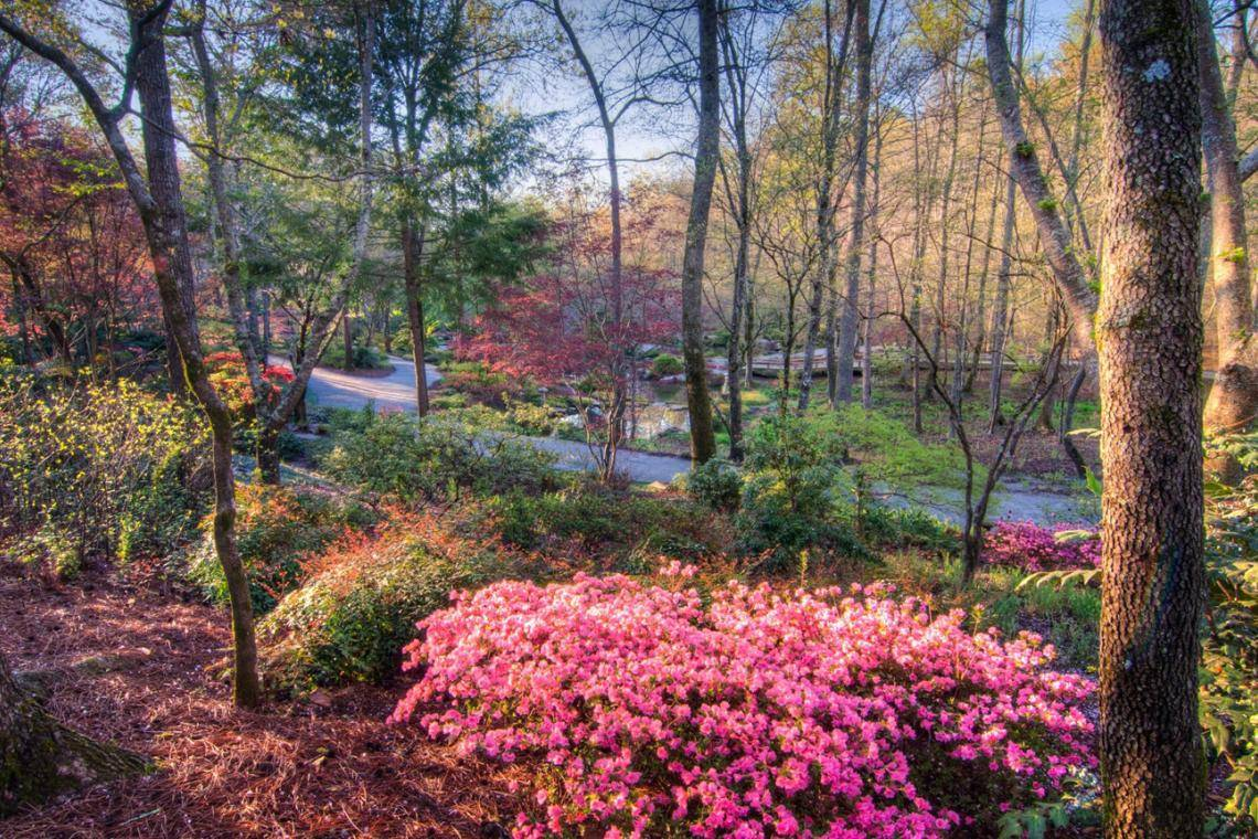 Fabulous Flowers Azaleas And Rhododendrons For Southern Gardens