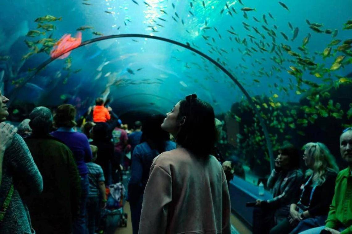 An Insider S Guide To The Georgia Aquarium Official Georgia Tourism Amp Travel Website Explore