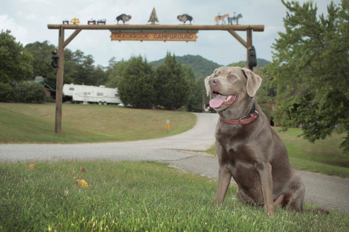 blairsville a pet friendly guide official georgia tourismblairsville a pet friendly guide