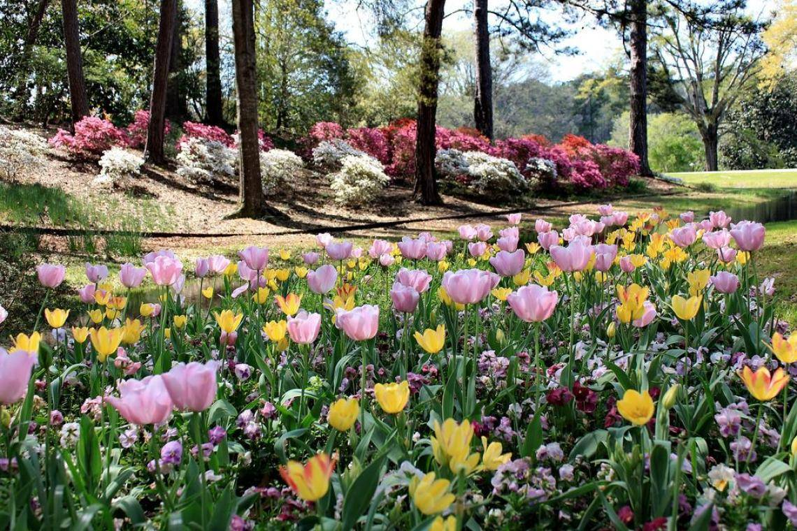 We Asked You Answered Springtime In Georgia Official Georgia