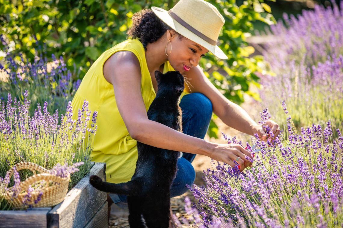 Georgia Lavender Farms, Festivals & Foods   Official Georgia Tourism